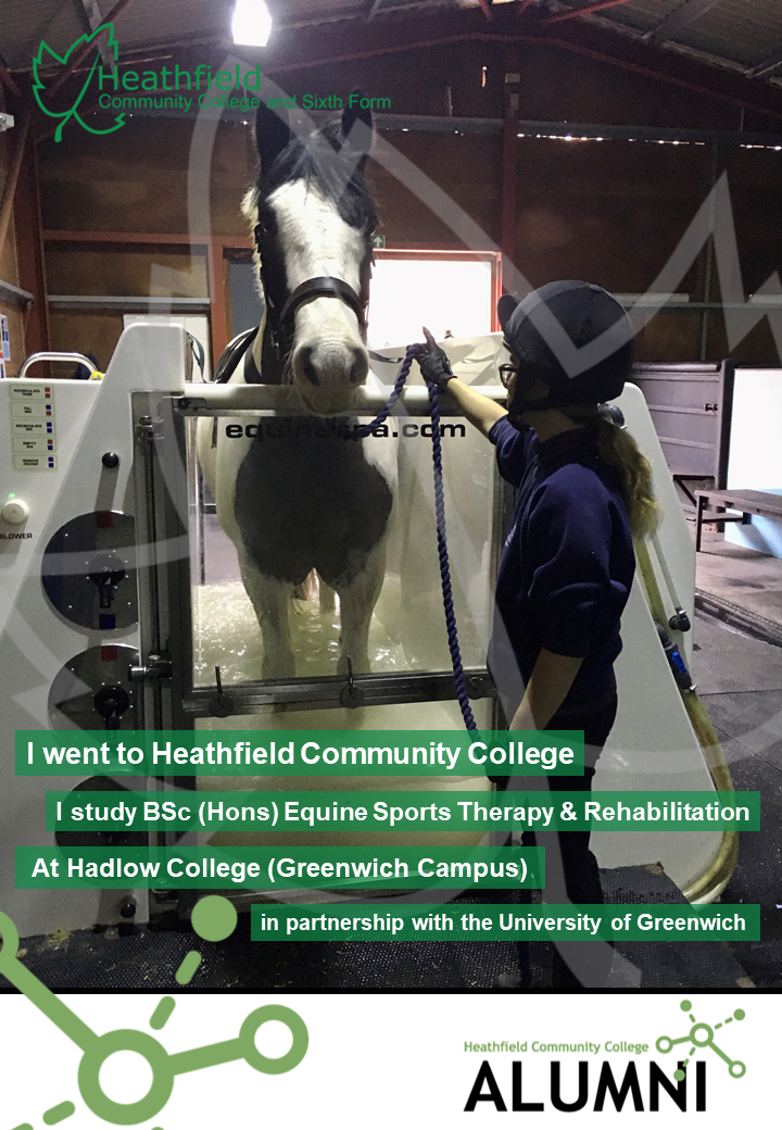 Olivia-Cottingham-Equine-Sports-Therapy-2021